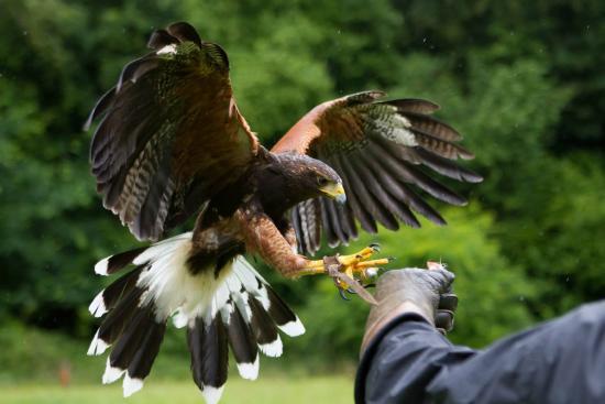 west-of-england-falconry